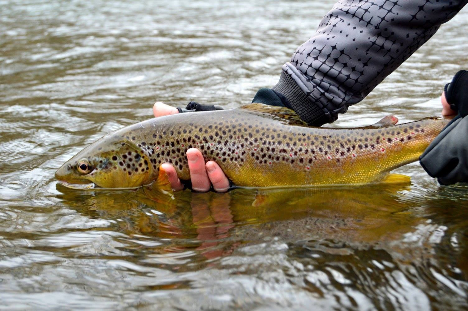 South Holston River Float Trip with Brown Trout Fly Fishing