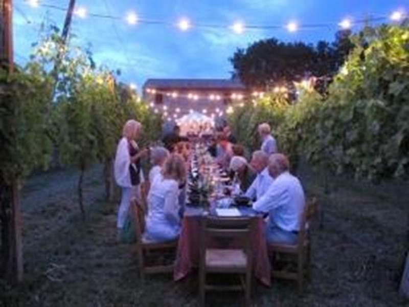 Enjoy a Dinner in a Chianti Vineyard - Siena, Italy