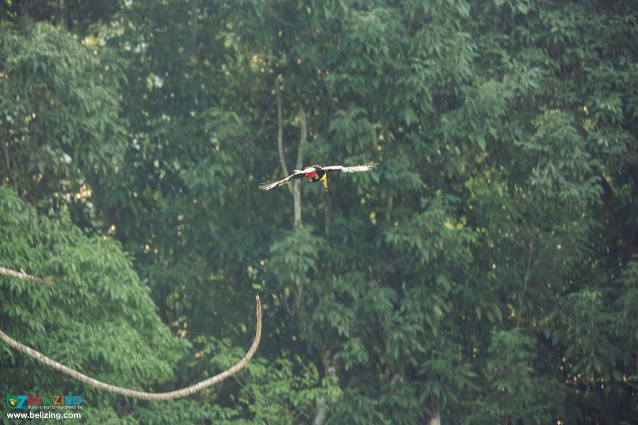 Bird Watching with San Ignacio Resort Hotel in Belize