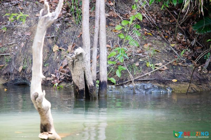 Monkey River Tour Belize