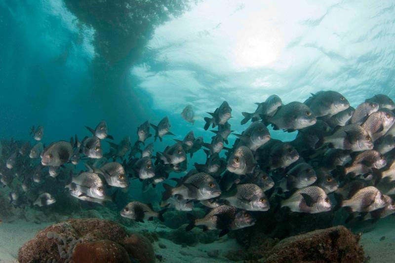 Hol Chan Marine Reserve - Photo Cred: Amigos Del Mar Dive Shop