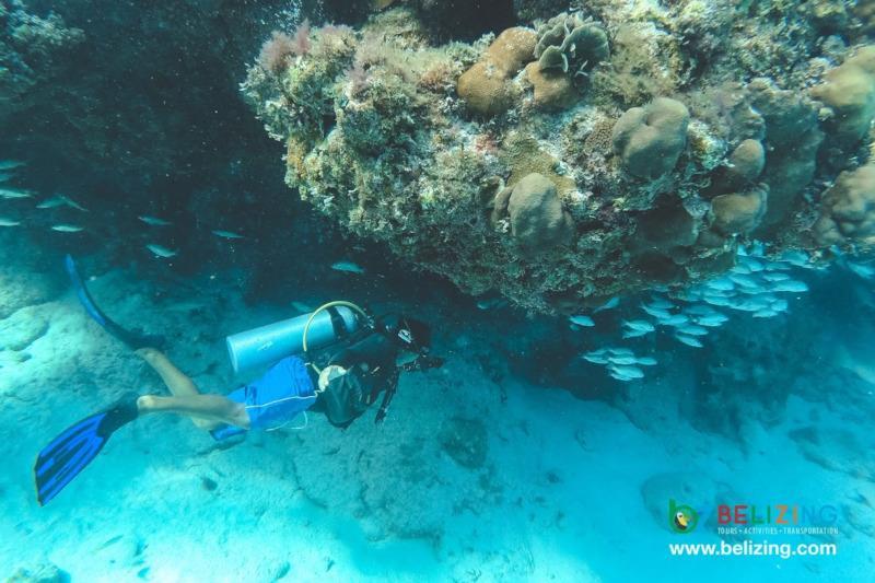 Caye Caulker Travel Guide - Diving
