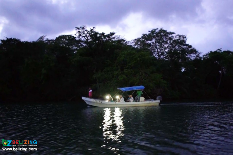Nocturnal Bioluminescence Tour Belize