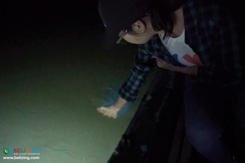 Nocturnal Bioluminescence Tour Belize