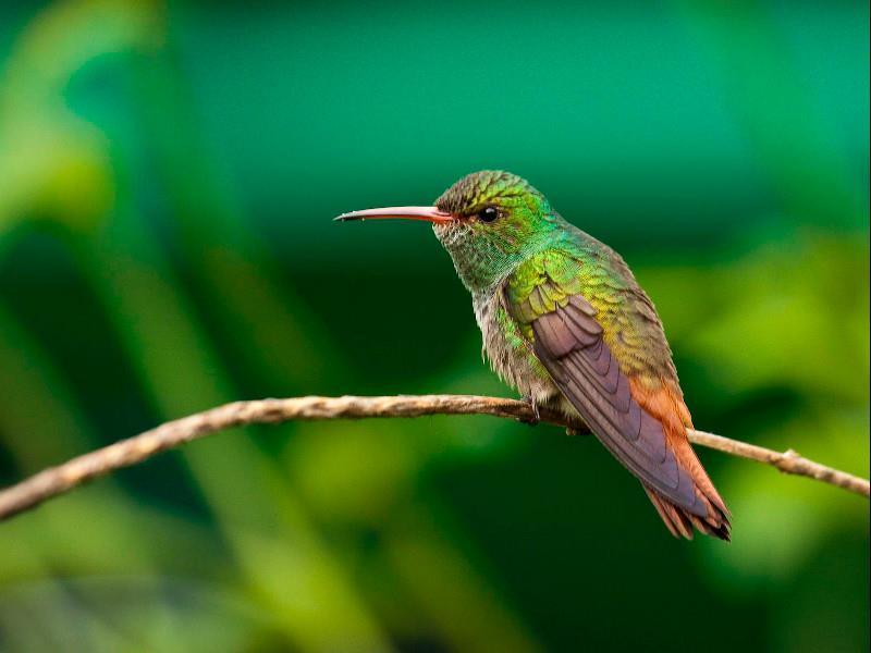 Belize A Birding Paradise
